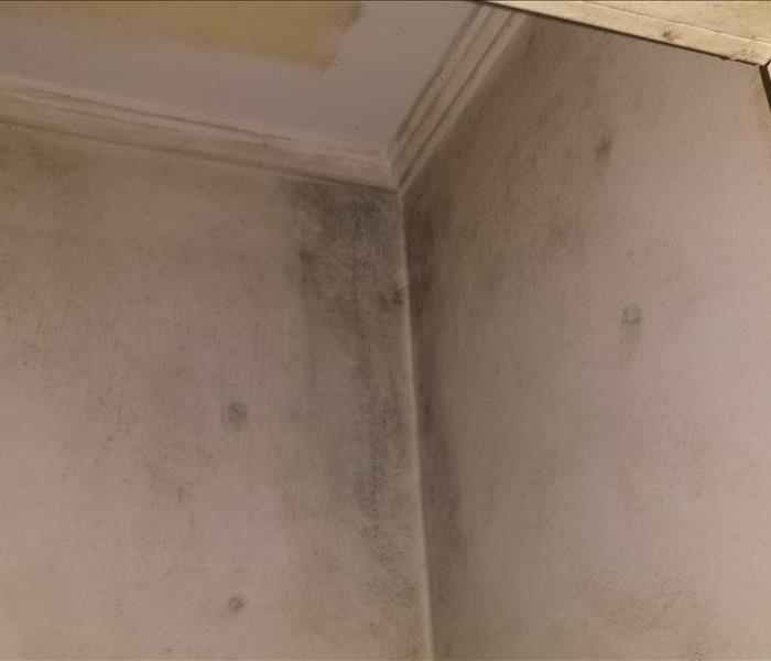 Mold Damage Myrtle Beach