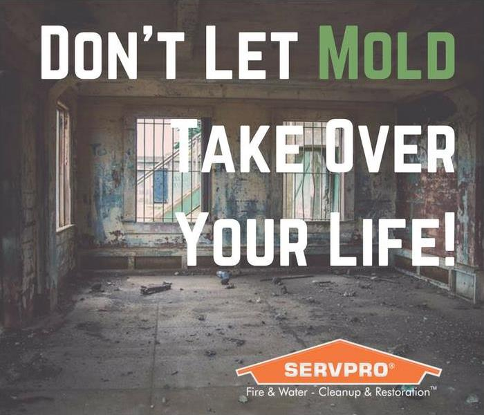 Mold Remediation Don't Mess With Mold In Myrtle Beach
